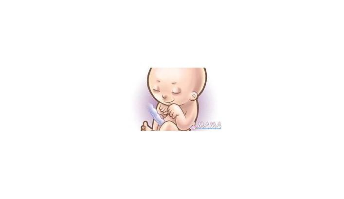 Беременность 23-я неделя плода